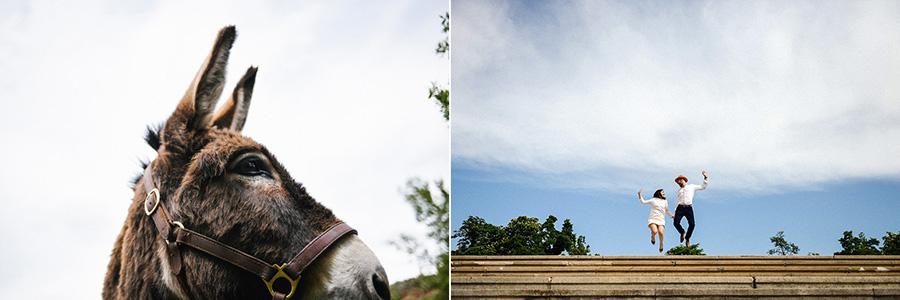 un âne regarde au loin, et un couple saute en haut d'un escalier